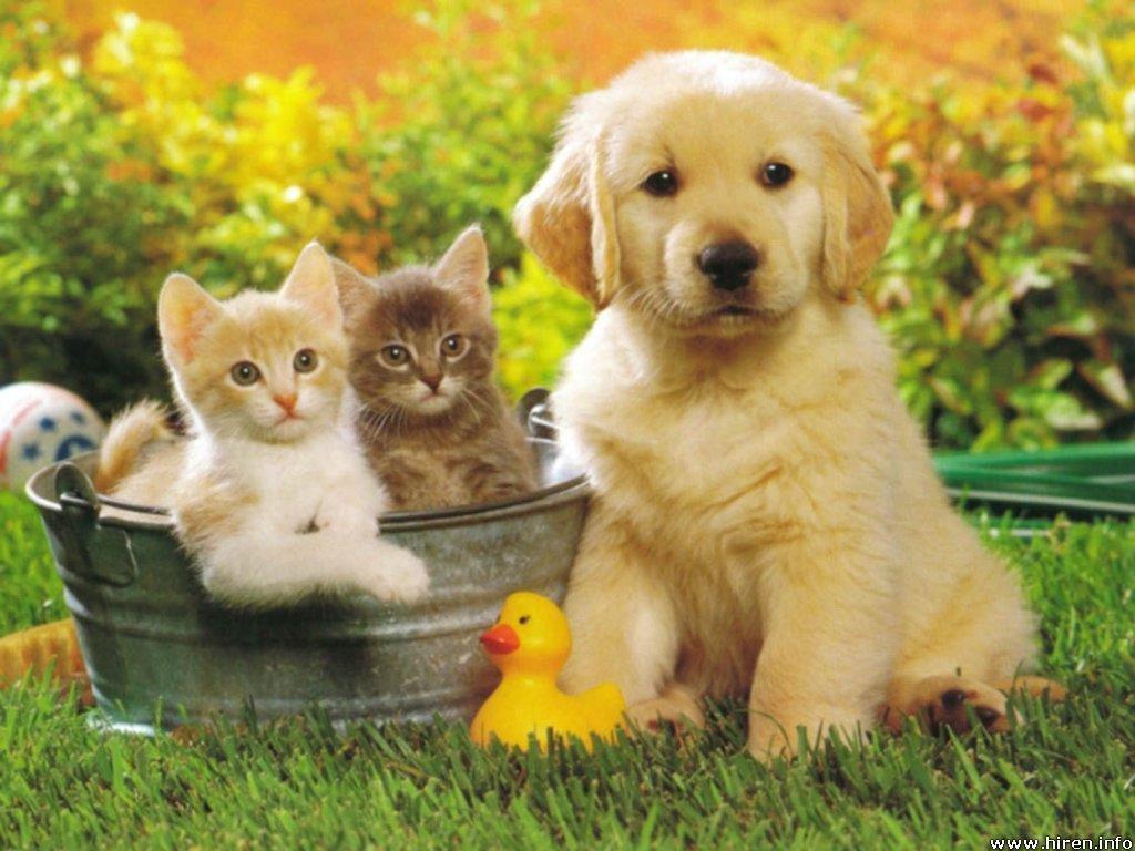 pet-sitting